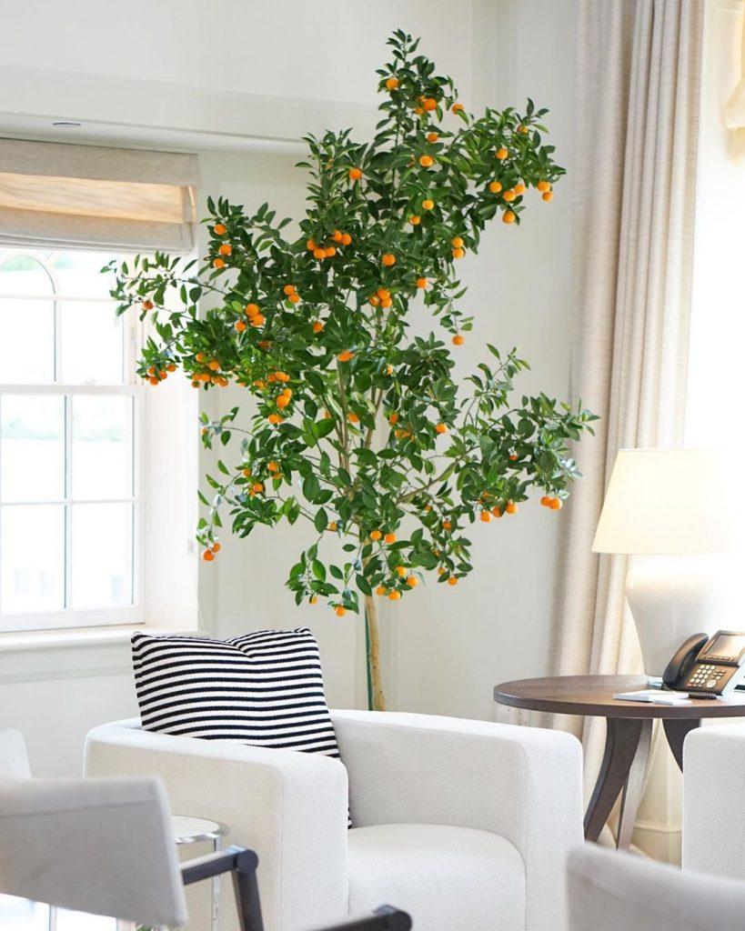 Orange Scent Room at the Mark